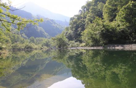 陇南阳坝自然风景区