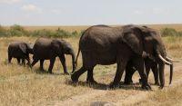 非洲故事——大象