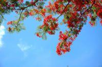 塞班岛—5天3夜自助游