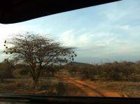 走近肯尼亚野生动物——桑布鲁(完)