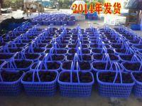 2015年余姚杨梅节余姚杨梅采摘