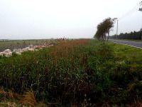 未能进东滩湿地公园 ~崇明岛游十二