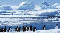 波塞冬探险之旅手把手教您南极的正确打开方式哦!