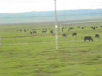 迷人的若尔盖草原