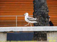 南欧的鸟4【原创-摄影】